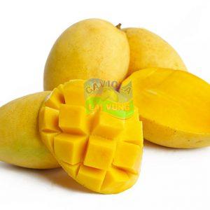 Xoài Tam Nguyên- Mango